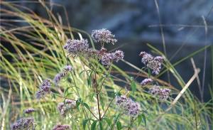 palika-lodge-fleur
